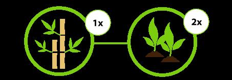duurzaam gekapt bamboe